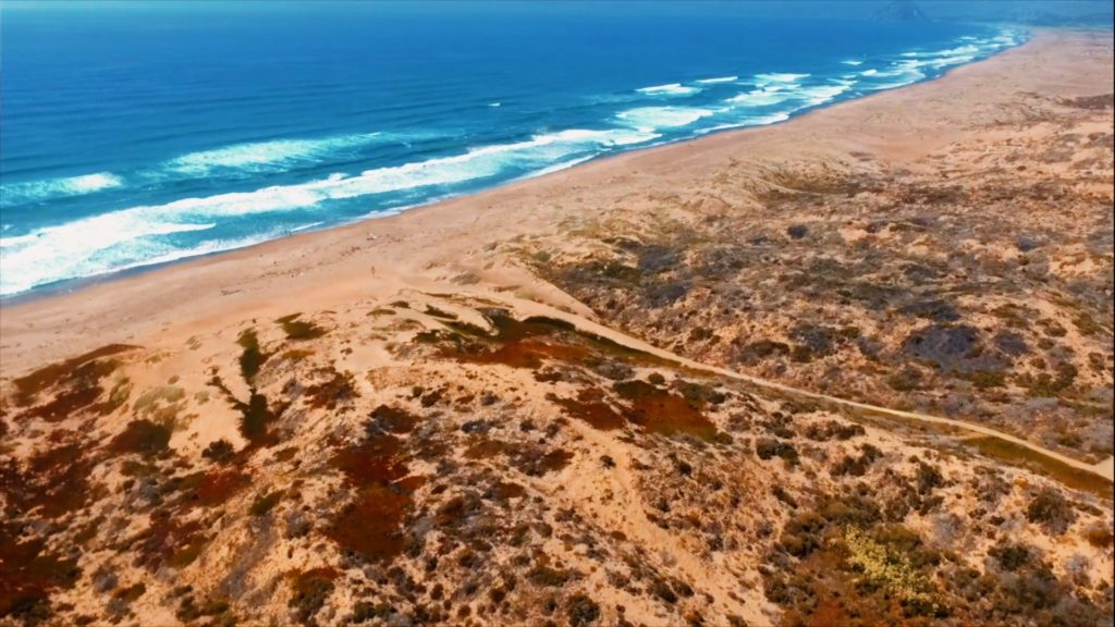 At some beaches in San Luis Obispo county, you will need to walk a bit from the parking lot...but worth it