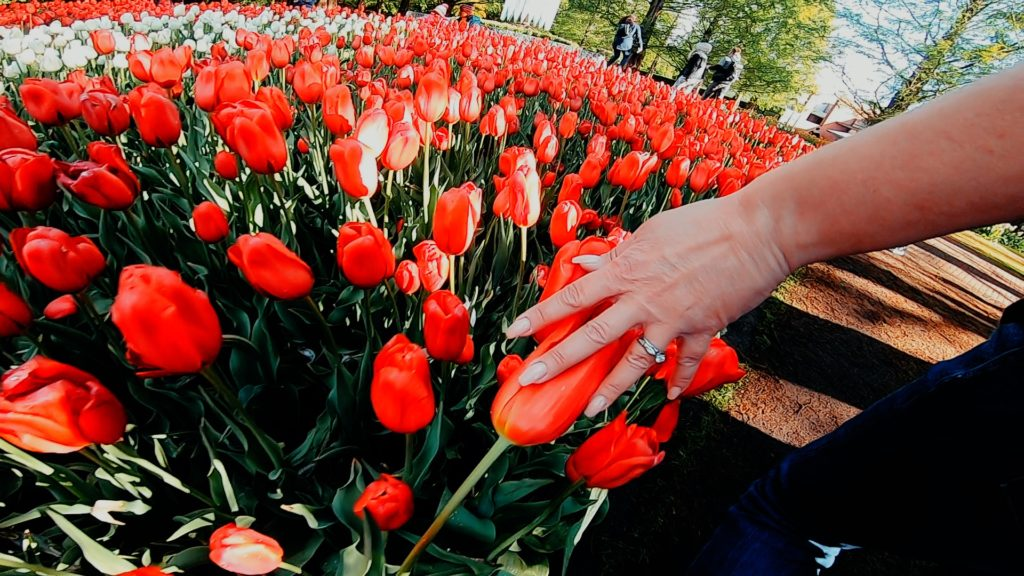 See the famous Dutch tulip gardens with EuroTrip Adventures!