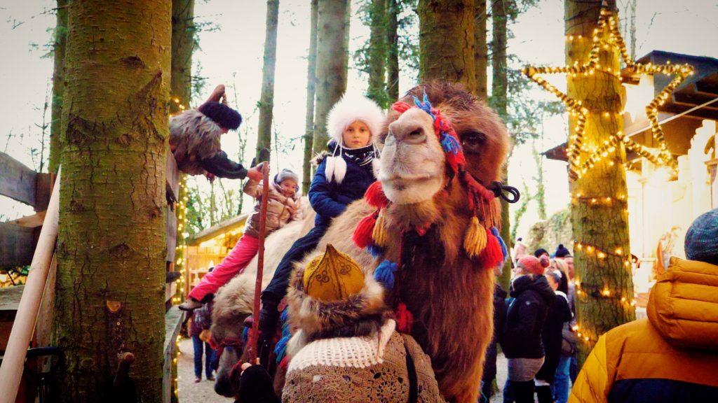 Children can ride camels at the Schloss Guteneck Christmas Market