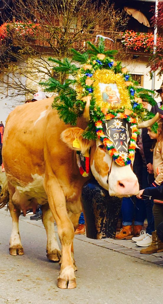 When the farmers bring the cows home in October, they decorate the cattle with headdresses covered in flowers, garlands, photos, and branches
