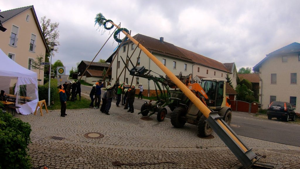 It usually takes a combination of strong men and tractors to raise a Maibaum safely!