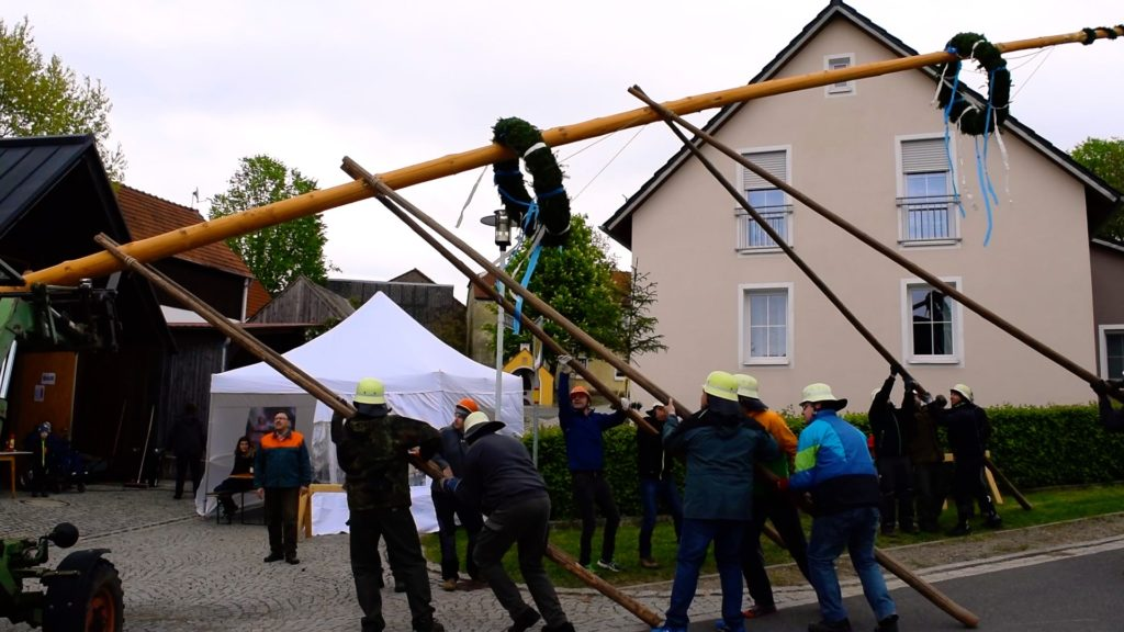 Raising the Maypole is no easy task! It usually takes a dozen men and a few tractors to hoist it safely