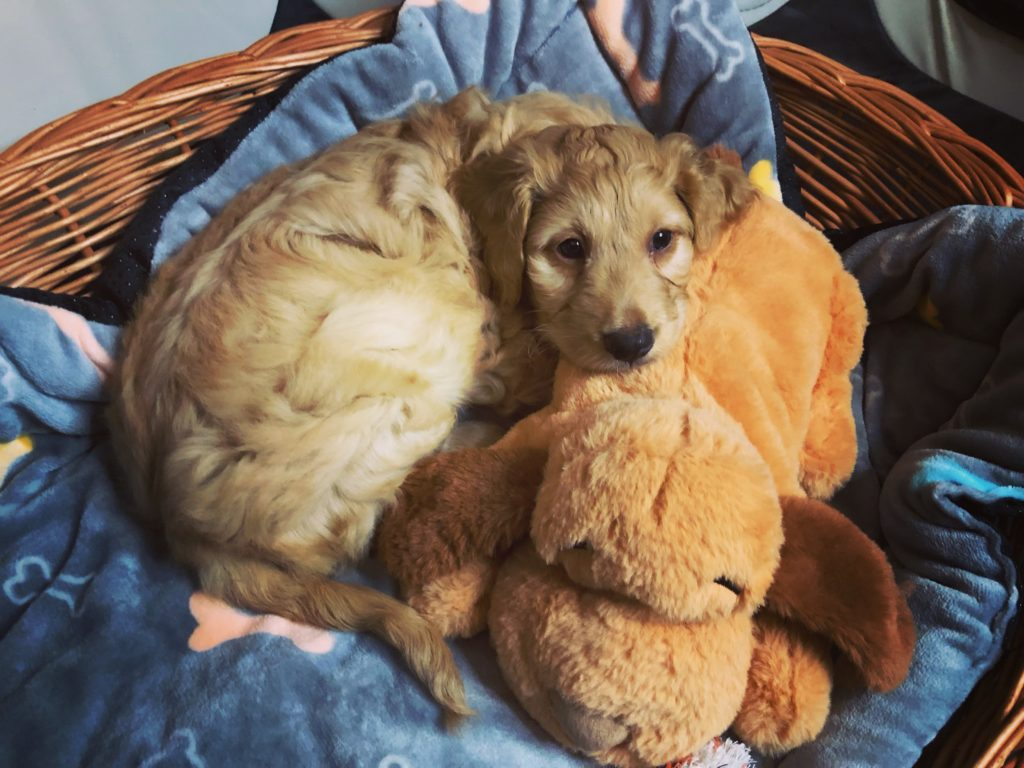 Make your puppy's home cozy with a basket, blanket, and a plush toy!