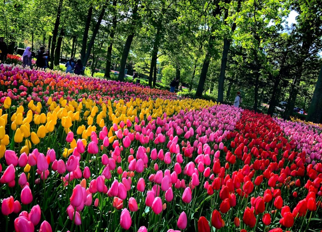 Tulips, windmills, coffee shops, cheese, canals...find it all in the Netherlands! Learn more at dtvdanieltelevision.com