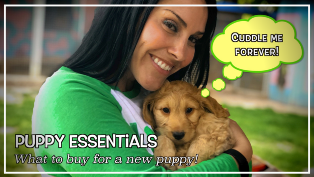 Don't know what to buy for your new puppy? Start here with our puppy essentials shopping list! dtvdanieltelevision.com