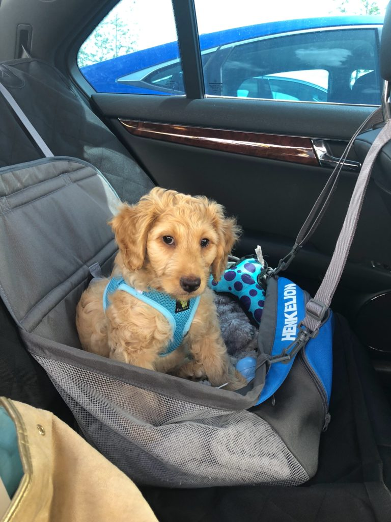 If you want to keep your car clean, this puppy car seat will keep your dog safe during the drive!
