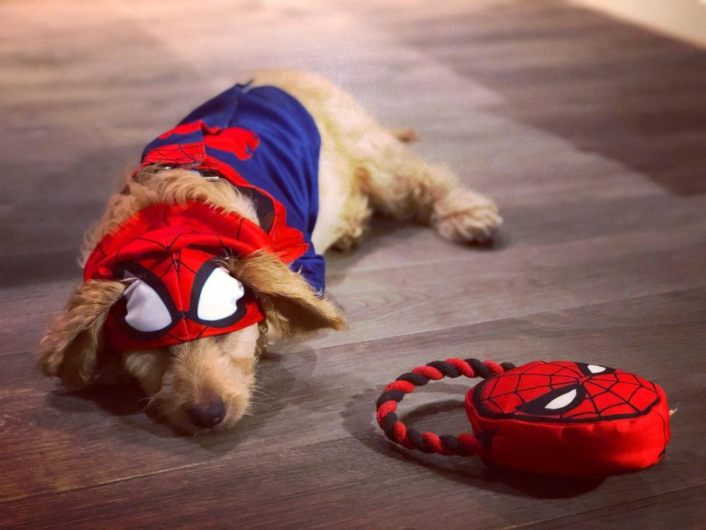 He may look like he doesn't like the costume, but Baxter loves the costume. Follow him on Instagram @lil_baxter_boy