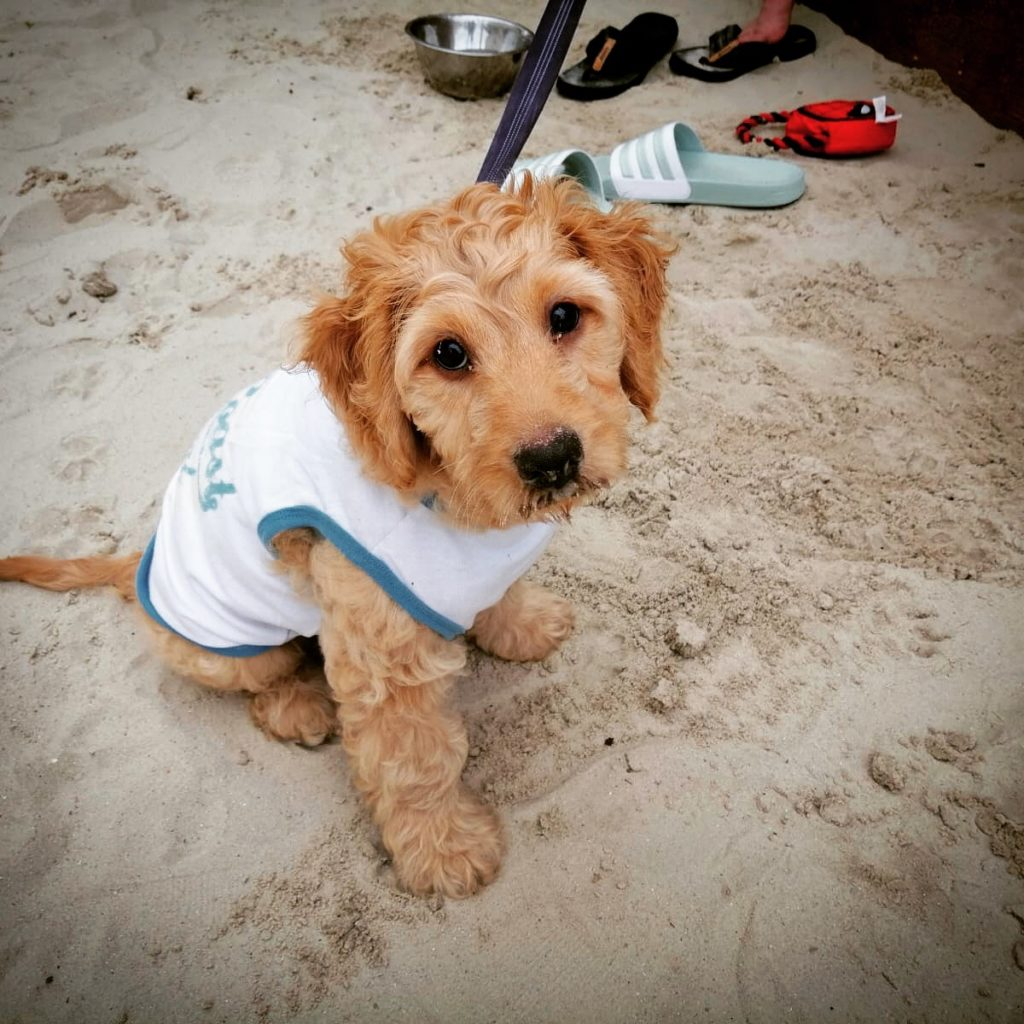 This is the face of a puppy who loves to eat sand. Follow him on Instagram @lil_baxter_boy