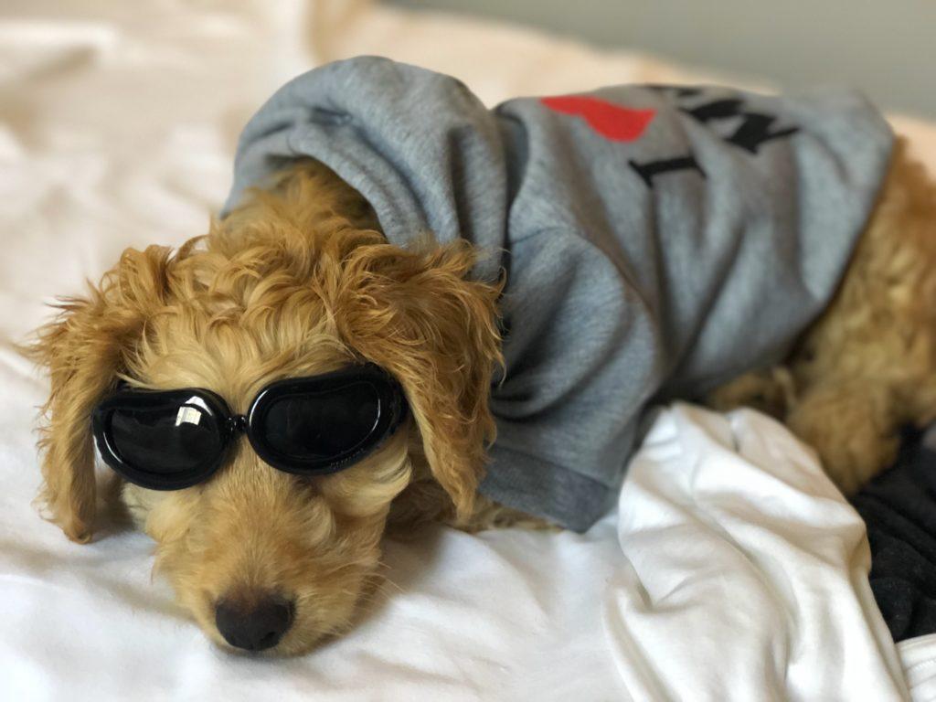 Baxter is ready for an adventure! Follow him on Instagram @lil_baxter_boy