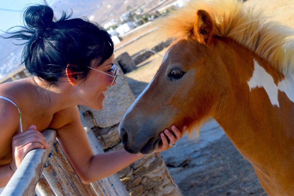 Mini horse on mykonos island greece
