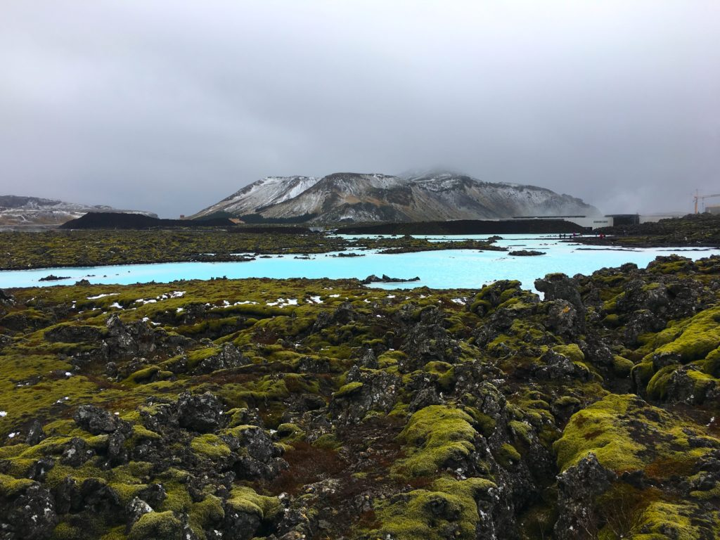 Green moss growing on top of lava rock with aqua blue thermal pools at the blue lagoon in Iceland