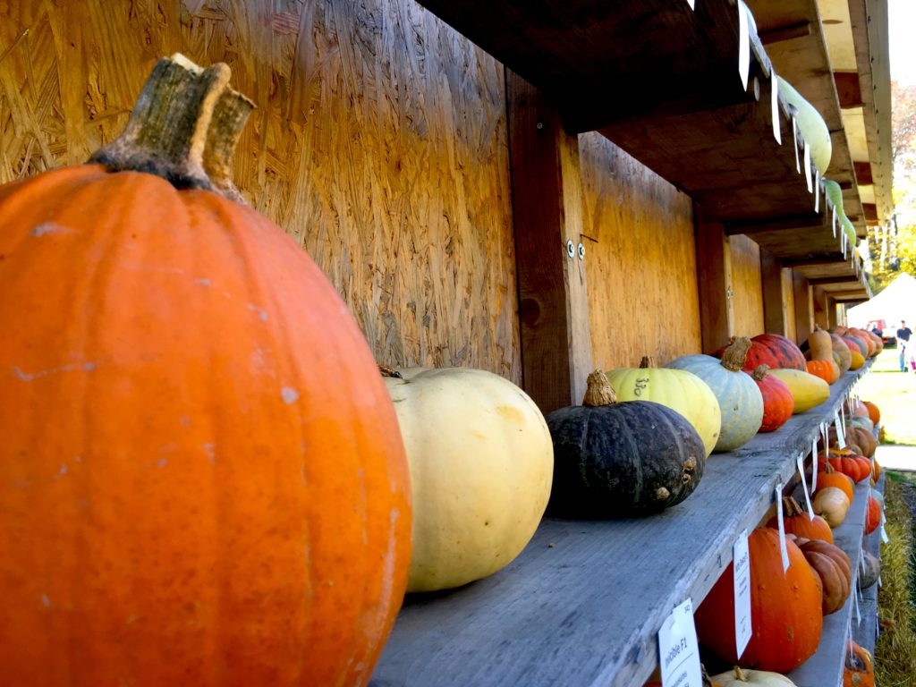 Displays of different sized pumpkins and squash in Ludwigsburg Germany